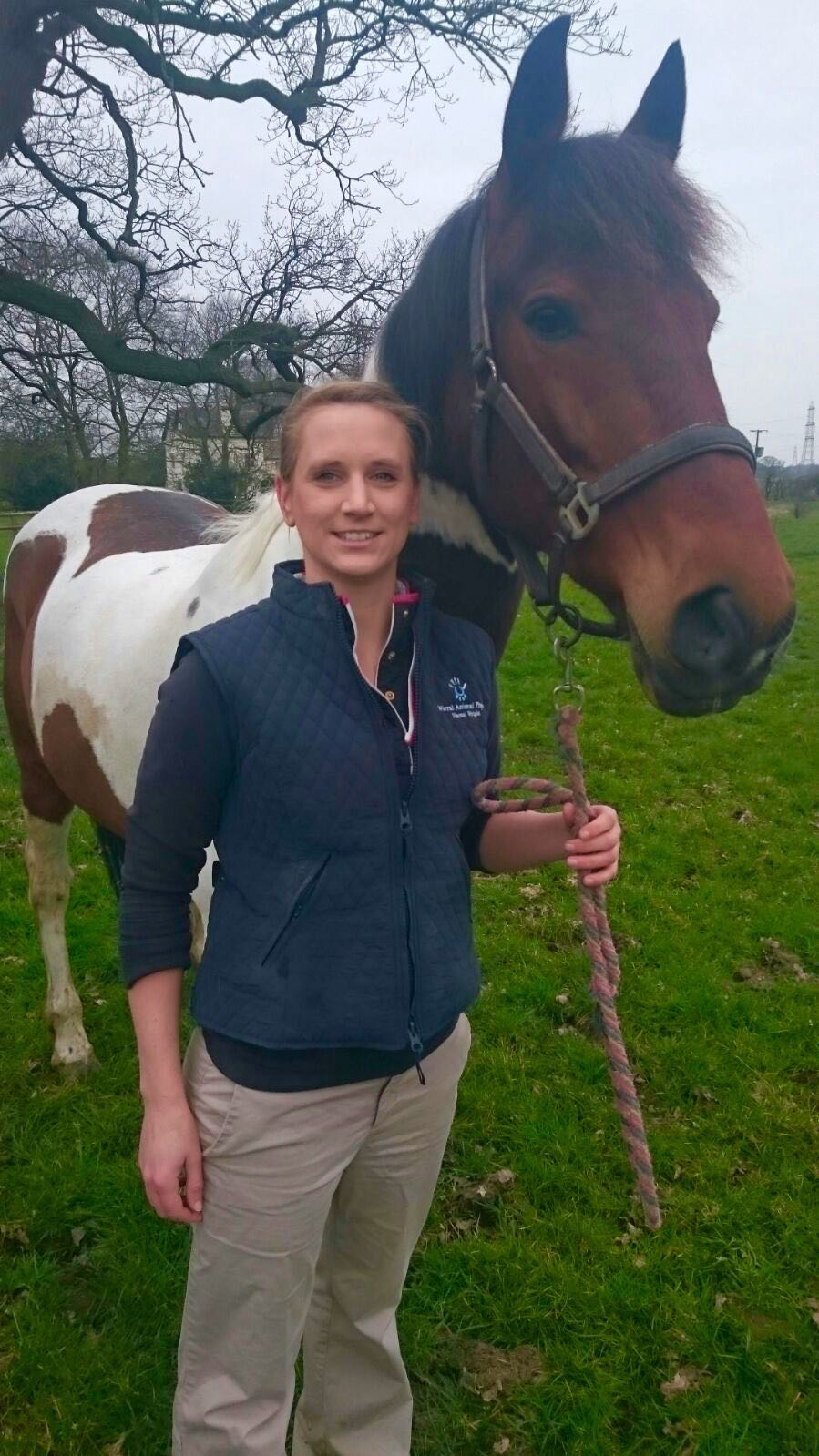 Equine Physiotherapy Wirral